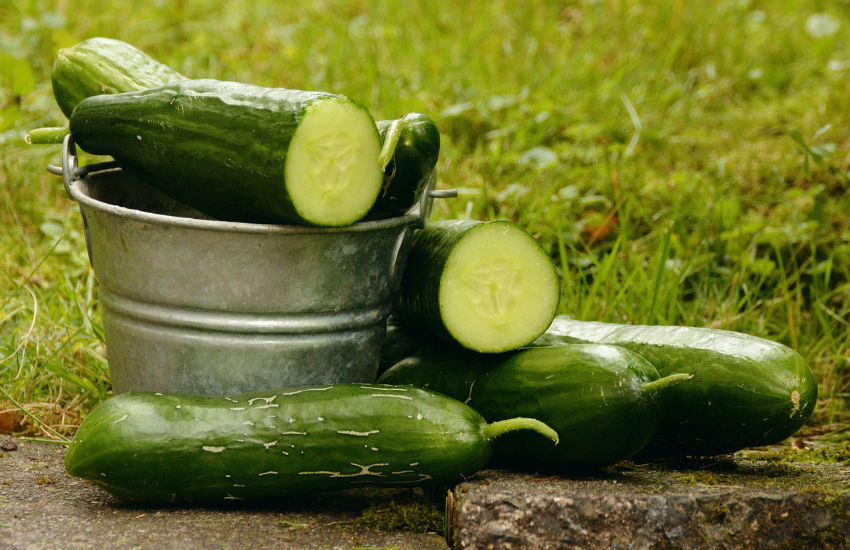 cucumber for hair growth in the nature